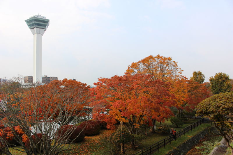 紅葉と五稜郭タワー
