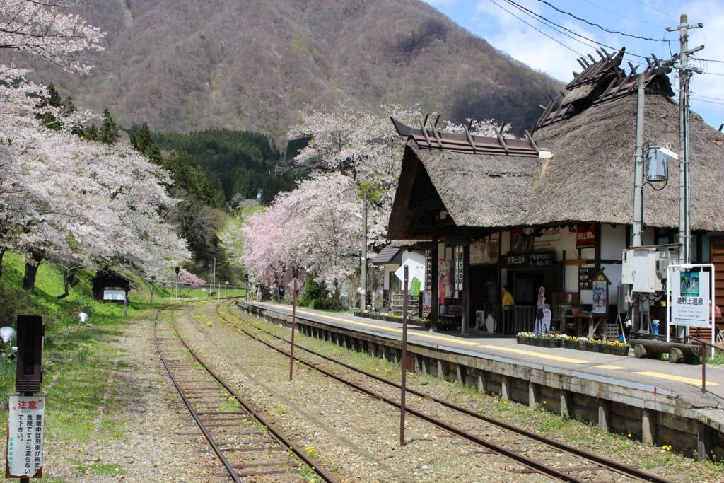 サクラが満開の湯野上温泉駅