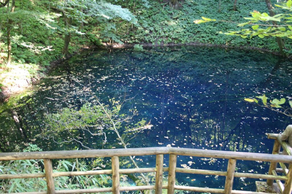 コバルトブルーの水をたたえる「青池」