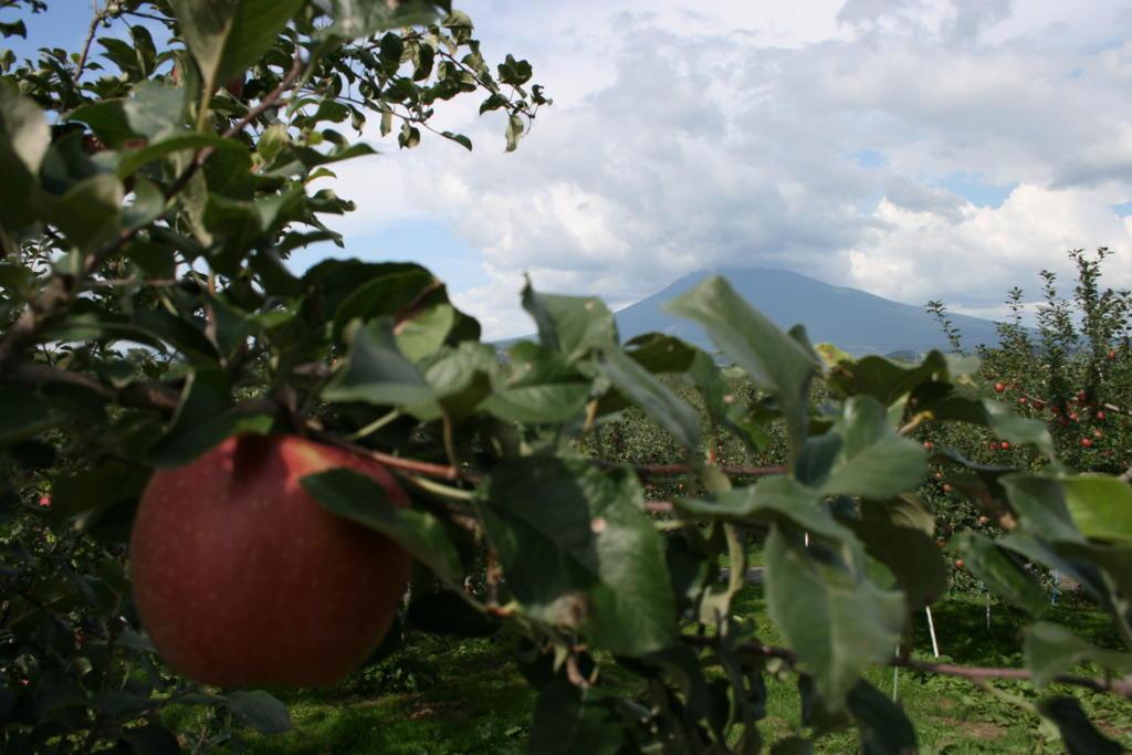 りんごの実の向こうには岩木山