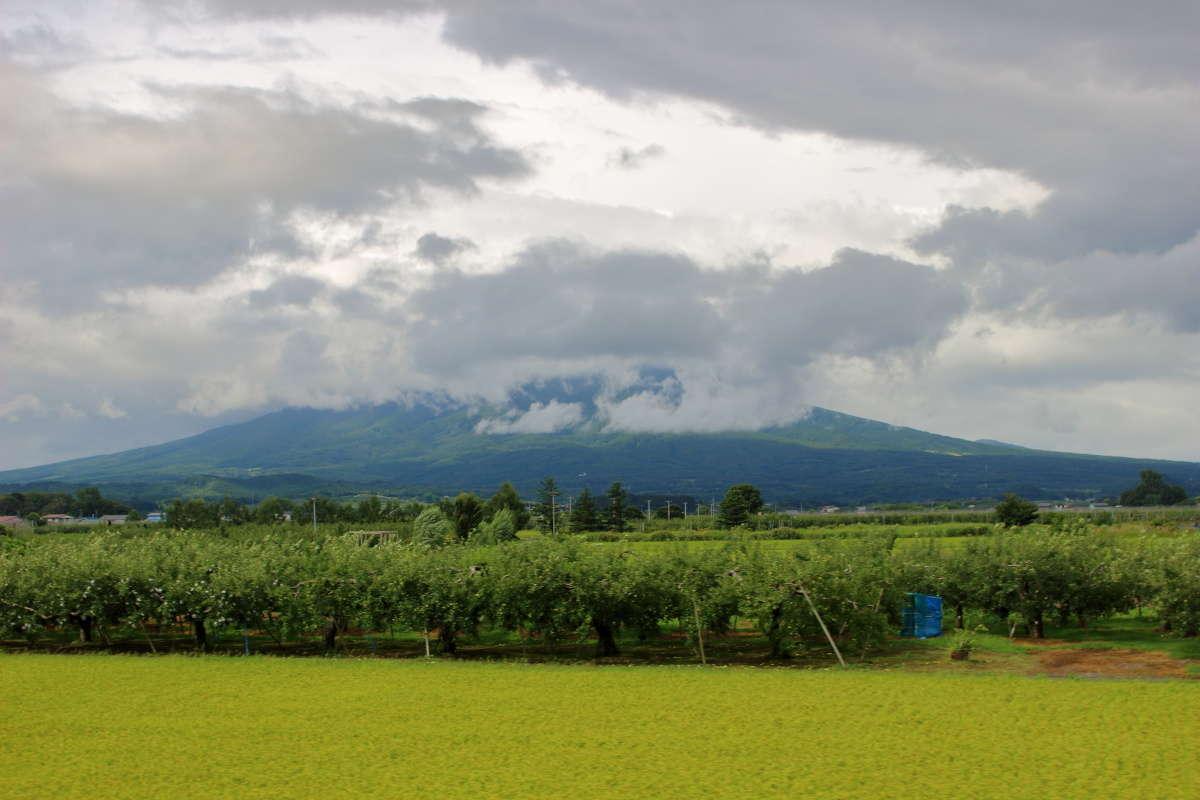 これぞ津軽!な風景、りんご畑と岩木山