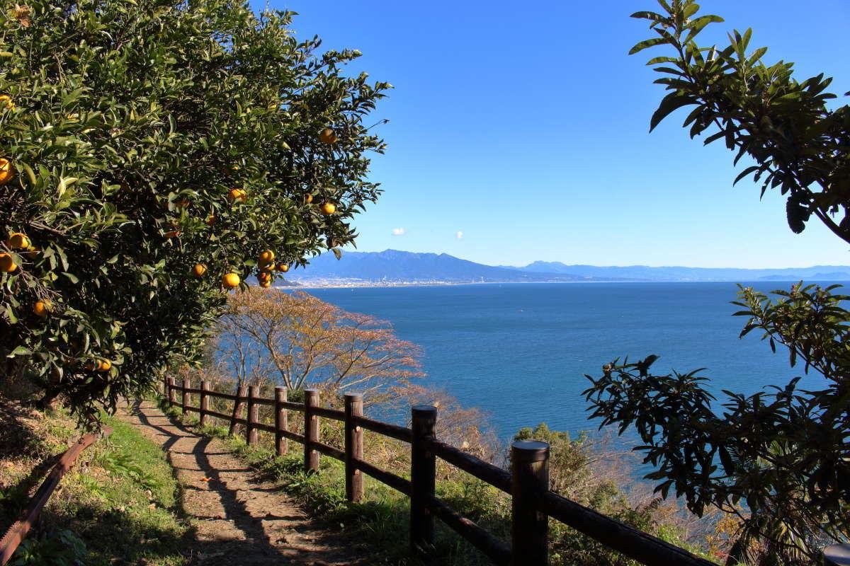 ミカンと駿河湾、静岡の風景