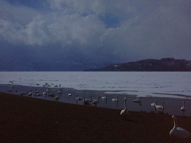 温泉が湧く湖岸近く以外は凍り付いていた屈斜路湖