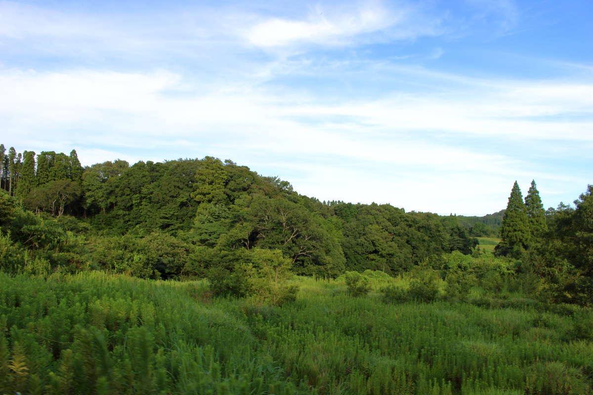 青い空と夏の濃緑が「房総里山トロッコ」の車窓を彩ります