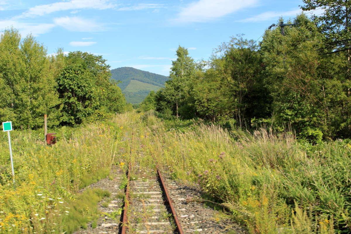 幾寅駅近くの踏切から線路を見ると草に覆われています