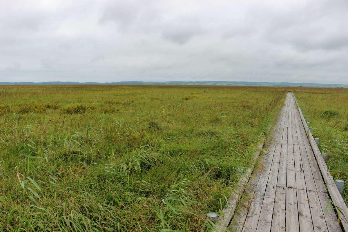 湿原の上に木道が整備されて散策ができます
