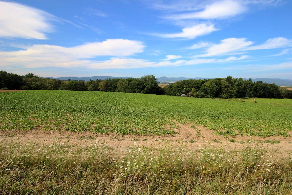 広々とした美瑛の丘の風景を満喫できるポイントがあちこちにあります