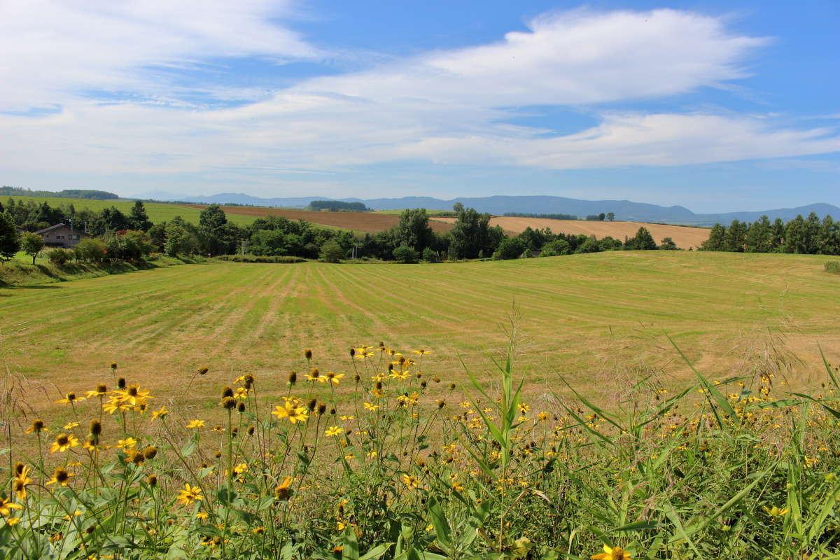 道路脇からの美瑛の丘の風景