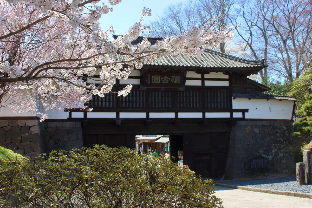 4月中旬頃には懐古園の桜が満開に!