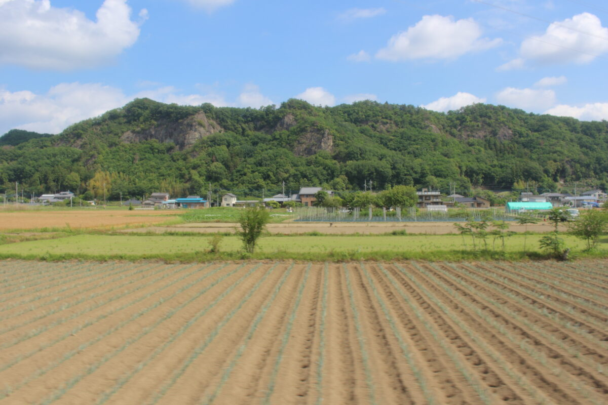 上信電鉄上信線の車窓から眺めるネギ畑