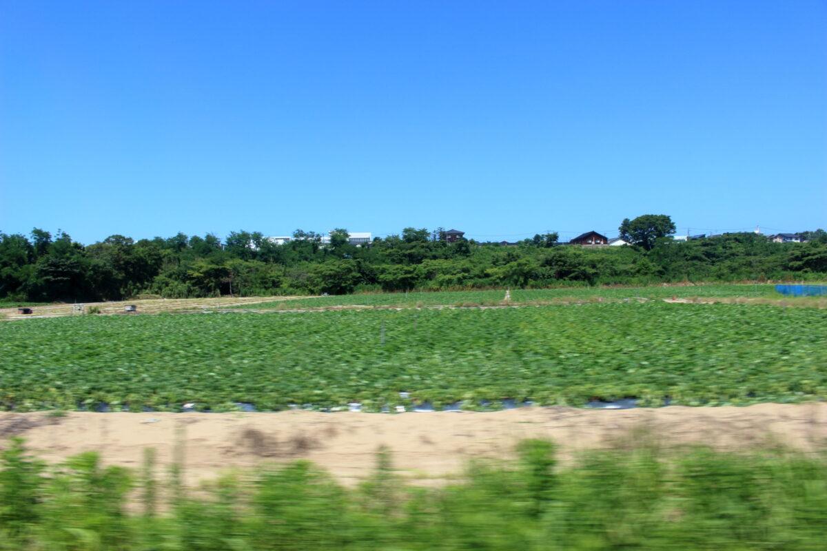 田園風景が続く「花嫁のれん」の車窓